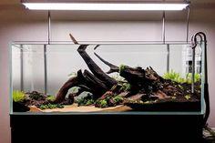 Biotope Aquarium, Aquarium Fish Tank, Planted Aquarium, Aquarium Landscape, Nature Aquarium, Betta Tank, Betta Fish, Colorful Fish, Tropical Fish