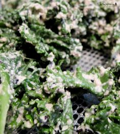 The Rawtarian: Community Login Kale Chip Recipes, Chips Recipe, Kale Chips, Ranch, Herbs, Food, Guest Ranch, Essen, Herb