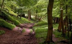 Image result for hertfordshire scenery