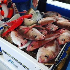 #snapper #fishing #charter #apollobay by big_dal_ http://ift.tt/1LQi8GE