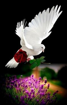 Znalezione obrazy dla zapytania good morning images in love symbol Dove Images, Dove Pictures, Jesus Pictures, Beautiful Rose Flowers, Beautiful Love, Animals Beautiful, Beautiful Nature Wallpaper, Beautiful Landscapes, Latest Good Morning Images