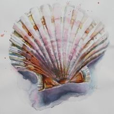 Watercolor Painting - Scallop Seashell by Tracy Male Seashell Painting, Seashell Art, Shell Drawing, Painting & Drawing, Seascape Paintings, Watercolor Paintings, Watercolour, Papier Paint, Beach Watercolor