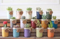 Wedding Succulent mason jar sets Celebration sized, wedding favor, baby shower, gift, wedding gift, center piece - READY TO SHIP