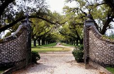 photo - Oak Allee & Entrance Gate, Boone Hall Plantation Scan of a slide. Our Daily Topic = Gateway to. Farm Entrance, Driveway Entrance, Entrance Gates, House Entrance, Grand Entrance, Brick Driveway, Driveway Landscaping, Driveway Design, Boone Hall Plantation
