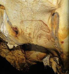 #Chauvet -- The Panther Panel -- 32,000-30,000 BCE -- Chauvet Cave, France