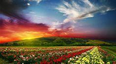 Rose Flower Garden Background