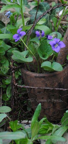 violets ᴀ ρᴇᴀcᴇғυʟ ρᴀʀᴀᴅısᴇ Buona giornata