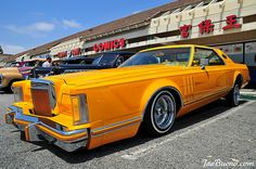 Yellow continental.....