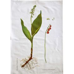 Dish Towel with Flora Danica Lily of the Valley