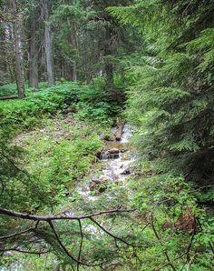Mount Revelstoke National Park. #Revelstoke, BC