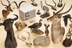 WIN: faux taxidermy stag's head up for grabs, as stuff fans Safestore celebrate maximalist interiors...