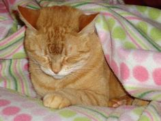 """If found or spotted please contact Lindsey Selmont at 518-369-5940 or Zee730@yahoo.com  Missing female cat--orange from Hubbard Run Condo Complex. Last seen on 1/14. She is 12 years old and answers to the name """"Kitty"""". Please contact me if you find her or see her! If found or spotted please contact Lindsey Selmont at 518-369-5940 or Zee730@yahoo.com  Orange Cat missing from Glastonbury, CT Adoption Process Adoption Benefits and Fees Pets of the Week Sponsored Pets of the Month All Adoptable…"""