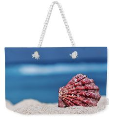 My Shell by Evgeniya Lystsova   Sea shell on tropical sandy beach with blue sea as a background in Cancun, Mexico, vacation concept #EvgeniyaLystsovaFineArtPhotography #Beach #Landscape #Travel #Shell #Coastal #Nature #Shore #Sea #FineArt #ToteBag #Textile #Fashion #Style #Accessories #ArtForHome #Summer