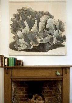blue coral linen hanging from natural history: the origin of style. Wooden Fireplace, Fireplace Bookshelves, Fireplace Wall, Coral Walls, Coral Blue, Coastal Decor, Natural History, Interior Decorating, Wall Art