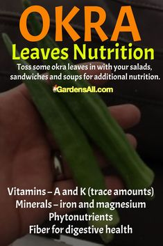 The primary nutritional contribution of okra leaves appears to be the insoluble fiber, good for digestive health, and many cultures enjoy them for the zesty bitter flavor okra leaves add to soups and gumbos. #vegetablegarden #vegetables #potted #beginner #raised #layout #backyard #DIY #Planters #Tomatoes #Soil #Trellis #Organic #Spring #Greenhouse #Pallet #Urban #Hanging #Shade #Planner #Growing #Flowers #Winter #Cover #Path #Rows #Wall #Terrace