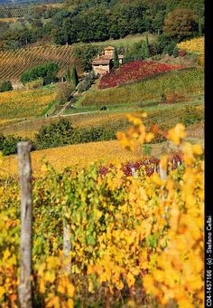 autumn - vineyards and truffles - Tuscany, Italy | Stefano Cellai, Age Foto Stock