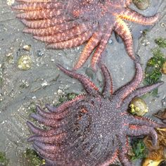 The beauty of the island-low tide, Bainbridge Island. Photo: Kathe Fraga 2012