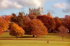 Wollaton Hall and Deer Park, Nottingham by Ray Clarke