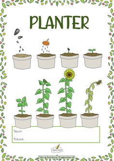 Kindergarten, Action Verbs, 21st Century Skills, Art Drawings For Kids, Preschool Science, Plantation, Teaching Kids, Montessori, Baby Room