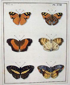 Butterflies | Dru Drury: Illustrations of natural history. W… | Flickr
