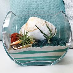 To the sea air Plant Terrarium