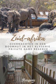 Onze hele reis naar Zuid-Afrika was één groot hoogtepunt, maar de beste herinneringen heb ik aan onze dagen bij Africa on Foot en nThambo Tree Camp. We sliepen twee nachten in deze prachtige kampen in het Klaserie Private Game Reserve, onderdeel van het Greater Krugerpark. De leeuwen liepen hier op twee meter afstand naast ons en de olifanten kwamen 's middags plots ons zwembad leegdrinken. Bekijk mijn favoriete plek in Zuid-Afrika. Game Reserve, Africa Travel, Cape Town, Lodges, South Africa, Resorts, Elephant, Hotels, Animals