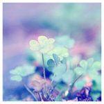 ultraviolet summer    by *AsBeautyDies