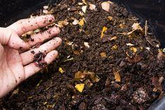 Cómo hacer abono orgánico con residuos caseros