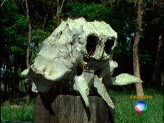 """""""Crânio"""" anômalo é encontrado em Guarantão do Norte, MT - Brasil - OVNI Hoje! : OVNI Hoje!"""
