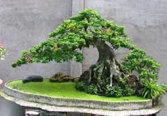 Bonsai Tree Ideas A Guide To Bonsai Trees For Beginners Bonsai Tree Ideas. The art form of bonsai can be a wonderful and unique hobby. Viewing and taking good care of a bonsai collection can be a r… Bonsai Tree Care, Bonsai Tree Types, Bonsai Forest, Bonsai Garden, Forest Garden, Garden Terrarium, Succulents Garden, Ikebana, Bonsai Acer