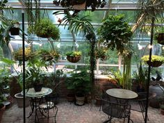 87 Best Sun Rooms and house Plants images   Gl conservatory ... House Plants With Exposed Fur Html on feather plant, girl plant, italian plant, horn plant, honey plant, white plant, garden plant, food plant, glass plant, silver plant, straw plant, milk plant, shell plant, dog plant, hair plant, japanese plant, mushroom plant, ivory plant,