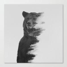 Bear, observing bear, andreas lie