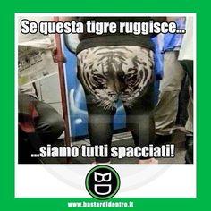 Il #ruggito tonante del terrore! #bastardidentro #pantaloni #tigre www.bastardidentro.it