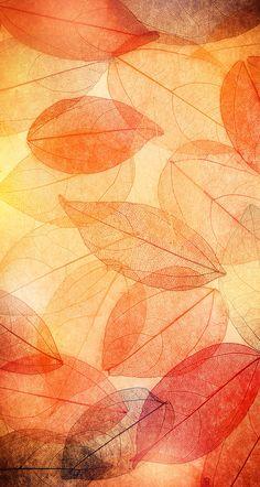 iPhone Wall: Thanksgiving tjn …