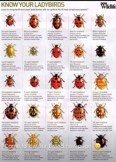 Ladybug Insects Ladybird Eating insects Bugs and insects Garden bugs - Interaction Imagination The story of a ladybird - Garden Bugs, Garden Plants, Flora Und Fauna, Beautiful Bugs, Bugs And Insects, Horticulture, Animals And Pets, Wildlife, Ladybugs