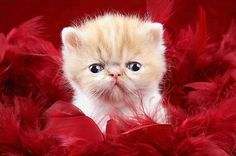 KITTEN posing in FEATHERS poster ADORABLE tiny PRECIOUS kids' FAVE 24X36