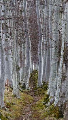 Pathway through the Trees