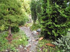 The Conica Spruce and Zmatlik Dwarf Arborvitae in the miniature garden can be fooled by this photo that it is a full size garden.