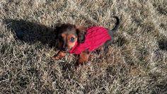 Red Sweater Doogie