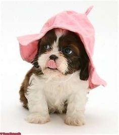 Saludos - Tap the pin for the most adorable pawtastic fur baby apparel! You'll love the dog clothes and cat clothes! <3