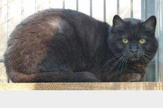 Aya aus dem Tierheim Freiburg sucht ein neues Zuhause!    Helft ihr und teilt diesen Beitrag. Danke.