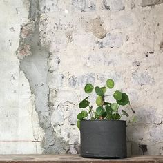 ODD STANDARD Sylinder 14 Plants, Plant, Planets