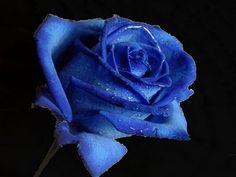 blue rose #ValsparBoardtoBrush