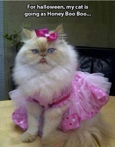 cat's halloween costume = honey boo boo