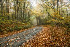 6 Ways to Enjoy Fall in North Carolina