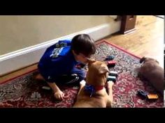 Feel Good Story Of The Year: Xena The Puppy Who Reached Jonny The Child With Autism | MrMilitantNegro™