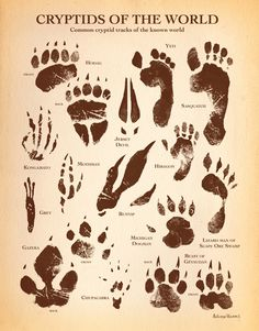 Draw Creatures Here is a pretty cool look at some of the more common cryptid tracks of the known world. It includes creatures like Bigfoot, Dogman, Chupacabra, and many more. Mythical Creatures Art, Mythological Creatures, Magical Creatures, Creature Drawings, Animal Drawings, Myths & Monsters, Arte Obscura, Legends And Myths, Mothman
