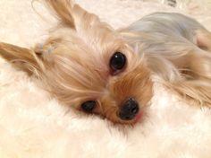 Puppuru : Hi~ I see you :)