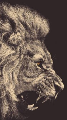 IPhone 6 Lion Wallpapers HD, Desktop Backgrounds 750x1334