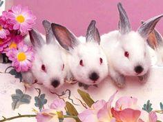 Lovable rabbit #rabbitlife